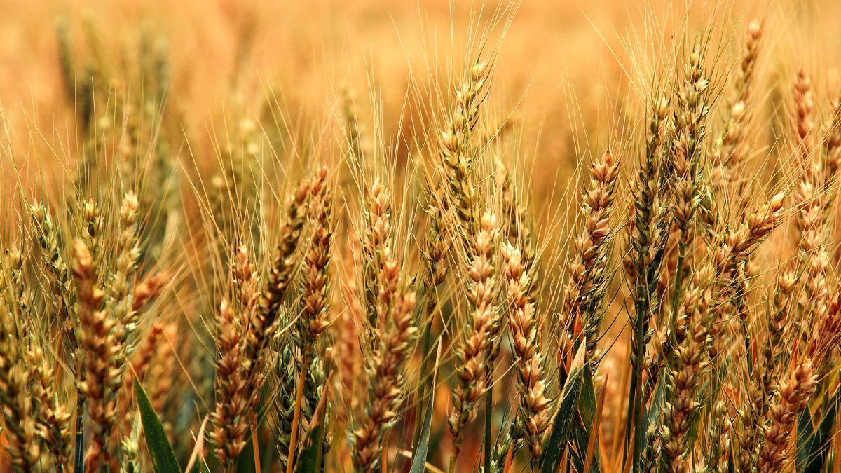 La digitalización, clave para garantizar inclusión y eficiencia en la agricultura