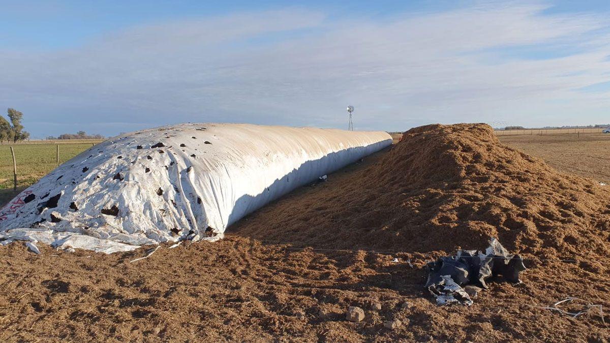 El episodio se registró en la mañana de este lunes en un campo al sur de Moldes