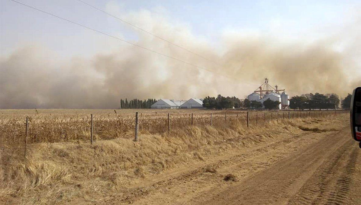Cuantiosos daños en un incendio en un campo de La Carlota