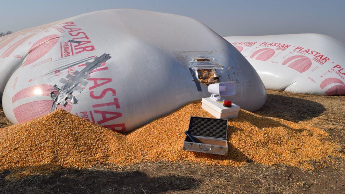 El sistema contiene un sensor de movimiento para instalar junto a los silobolsas.