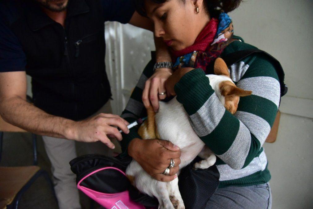 Municipio realizará campaña de vacunación antirrábica gratuita