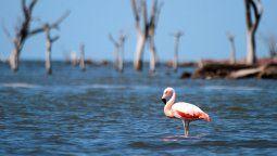 Los flamencos y el fondo de árboles secos en medio de la laguna de Mar Chiquita, una de las postales más representativas del lugar, que contiene una enorme biodiversidad.