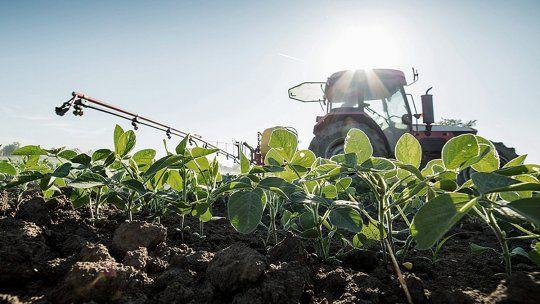La soja tuvo buenos rindes en la última campaña, aunque el volumen final cosechado fue menor al ciclo previo porque se sembraron menos hectáreas.