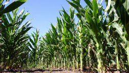 Los números del agro: genera 22% del empleo privado y 60% de los dólares