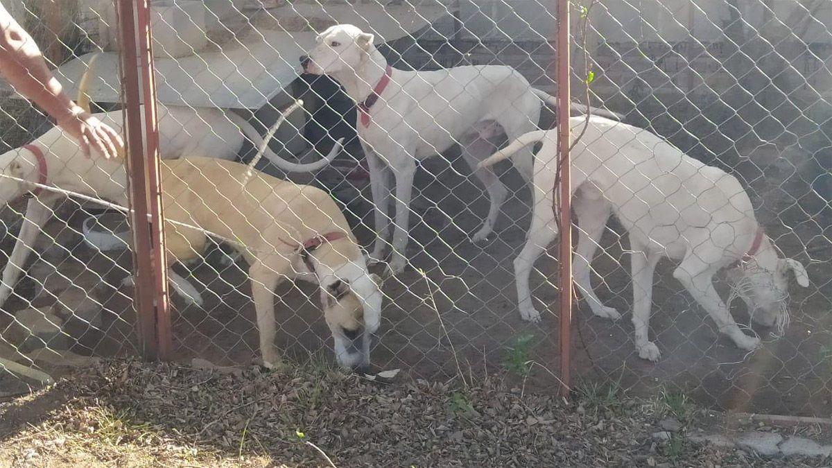 Los perros secuestrados tras el ataque en Jovita.