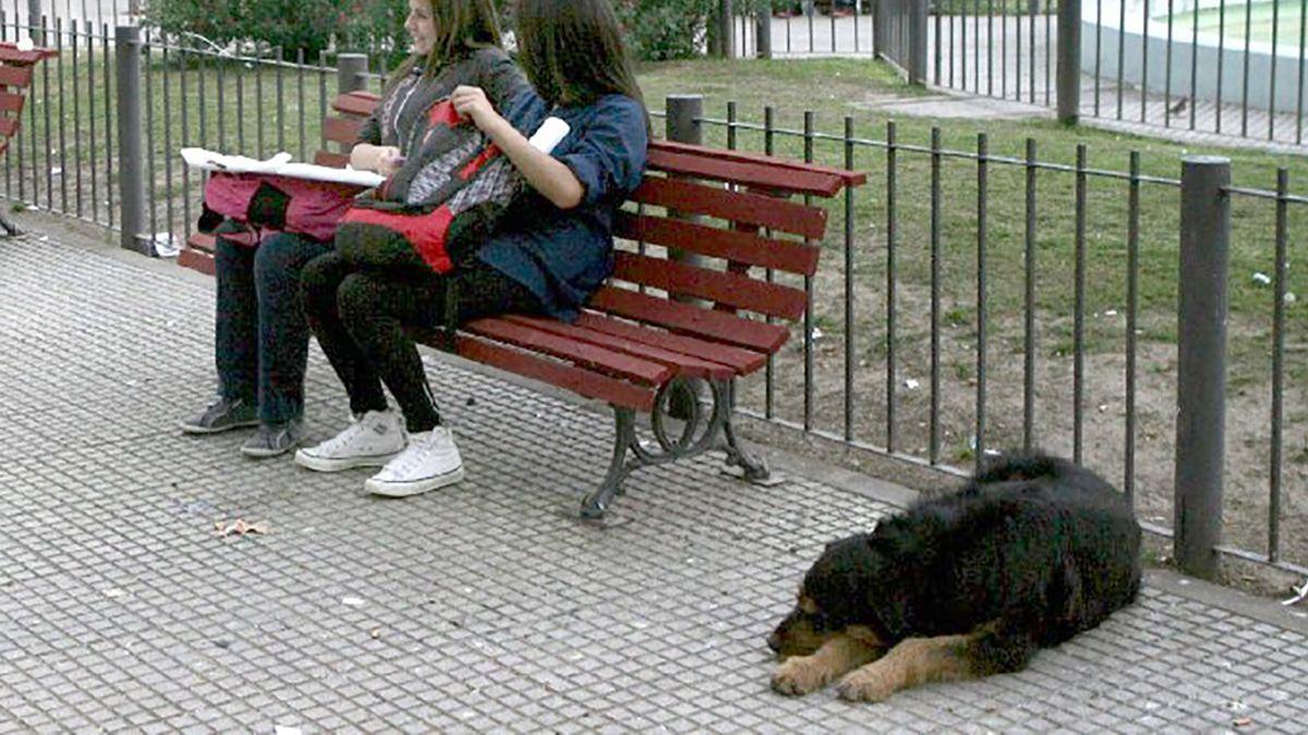 Se denuncian más de 30 mordeduras de perros al mes: el 80% tienen dueño