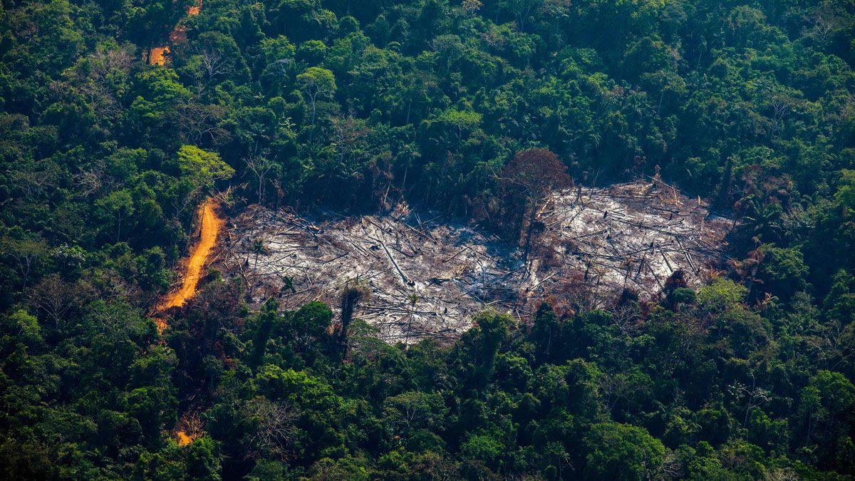 La ONU lanzó un programa con el objetivo de restaurar ecosistemas.