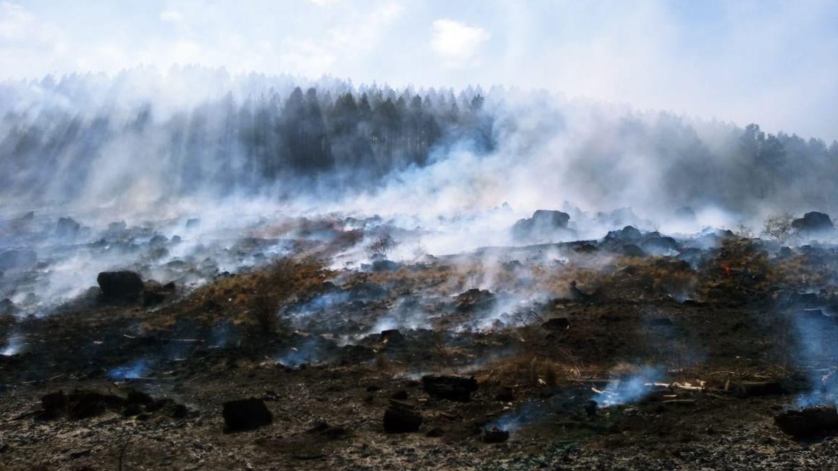 El foco activo se encuentra dentro de un sector de pinares en la zona de Rodeo de los Caballos.