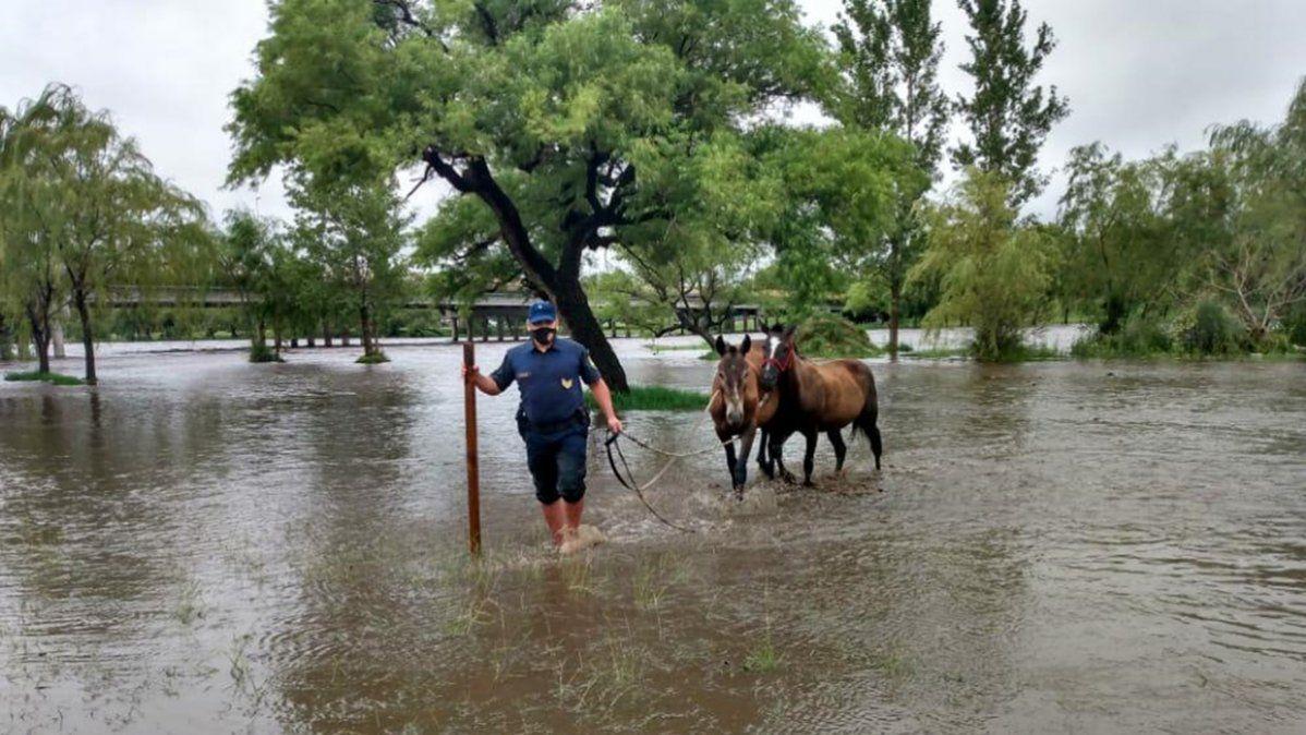 Rescataron equinos atrapados  en la crecida del río