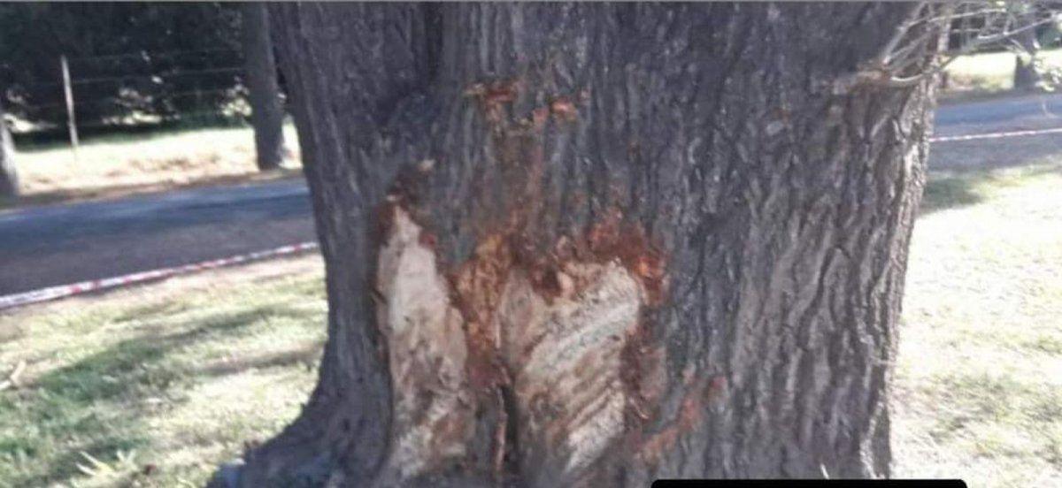 Fatalidad en General Cabrera: un hombre perdió la vida tras chocar un árbol con su auto