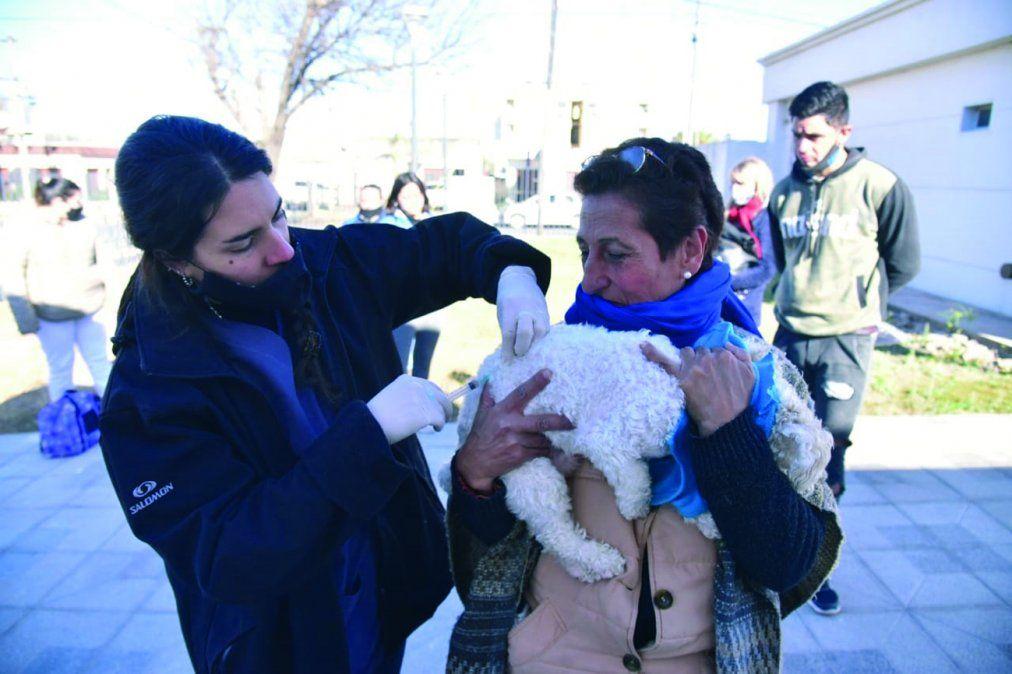 Imagen de la campaña: los vecinos vacunan a sus mascotas.