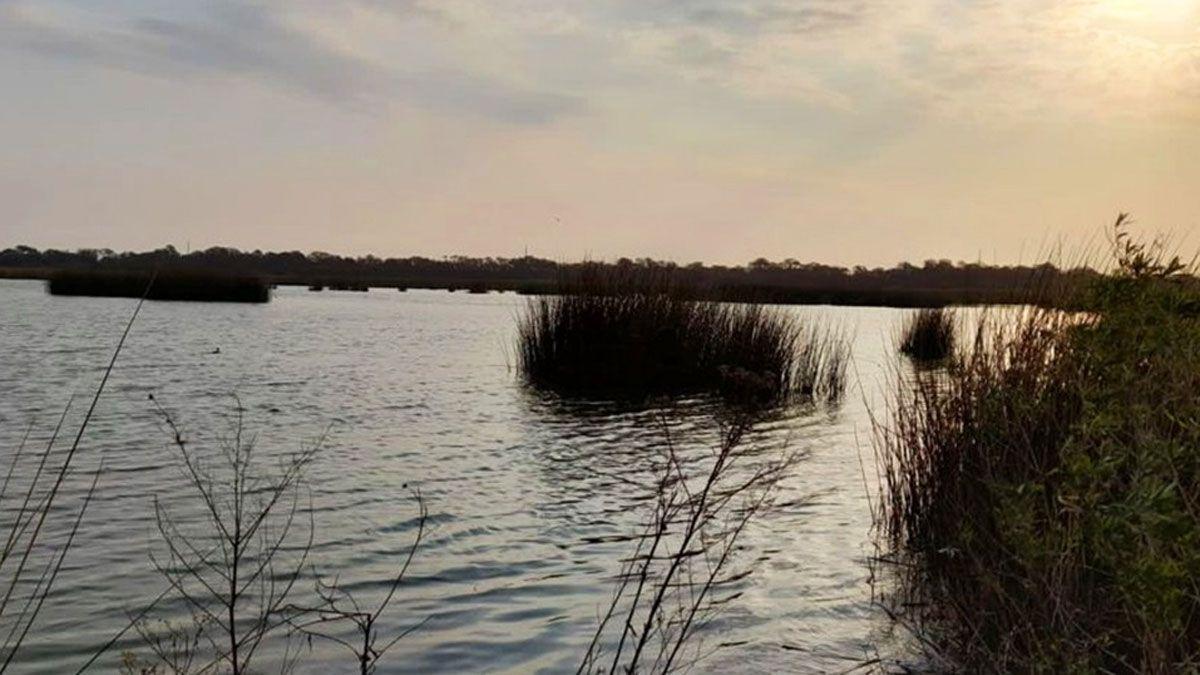 Policía Ambiental rastrea las crías de yacaré vistas en una laguna del sudeste cordobés