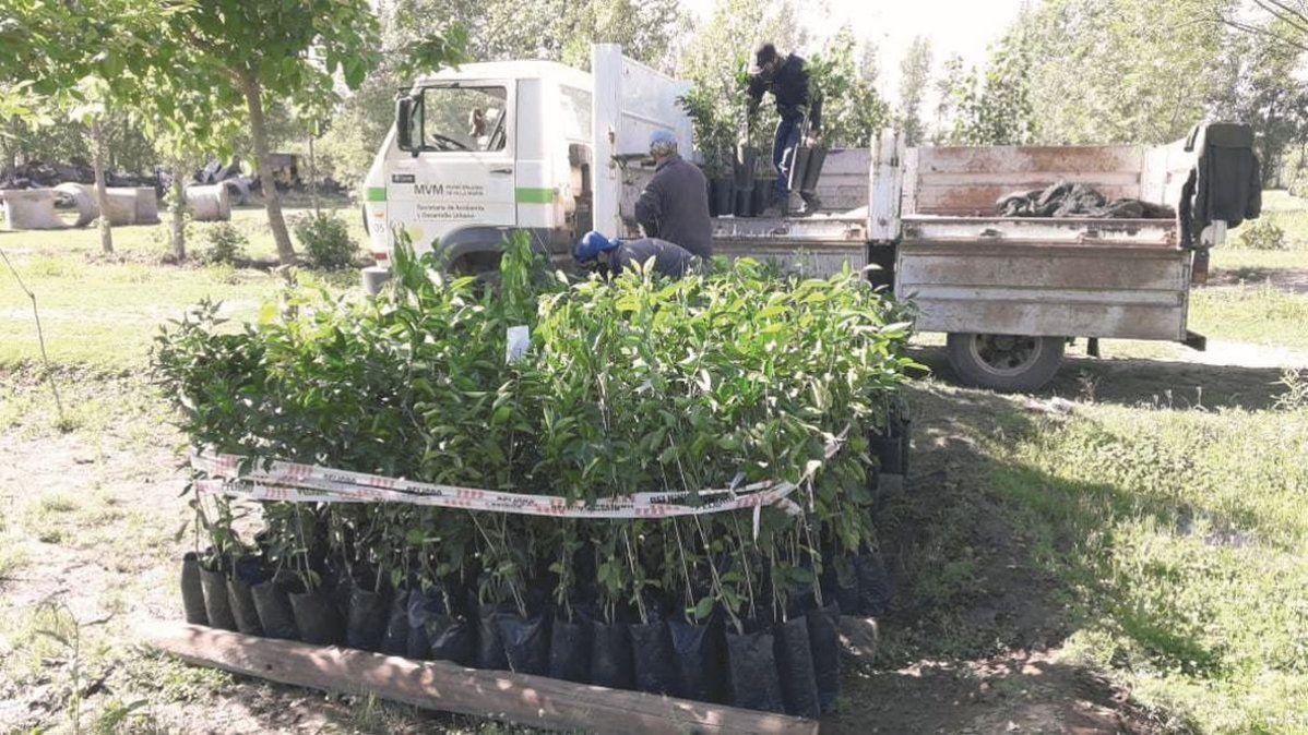 Adopción de 300 árboles frutales