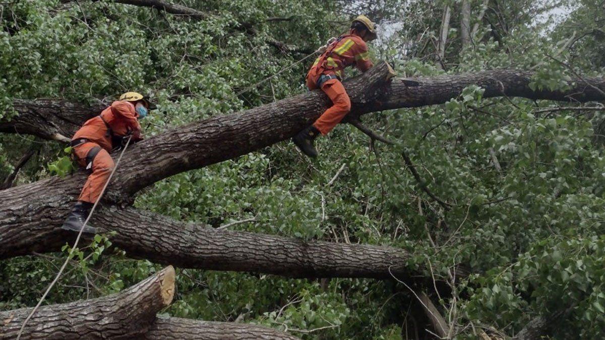 En Villa General Belgrano también hubo caída de árboles.
