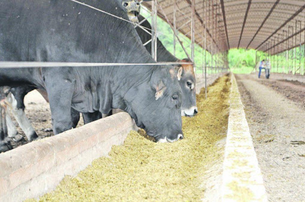 La burlanda que se produce en la ciudad llega a 165 mil animales
