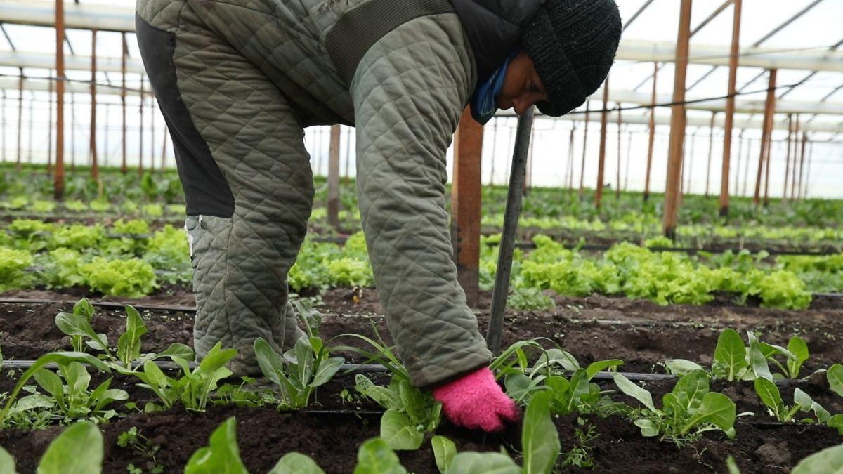 El Plan Nuestras Manos fue lanzado por la cartera agropecuaria a fines de 2020 con el objetivo de contribuir a la mejora de las condiciones de producción.