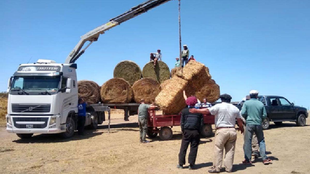 Un camión cargado de fardos y rollos llegó hasta la zona de El Carrizal. Los alimentos fueron distribuidos entre pequeños productores.