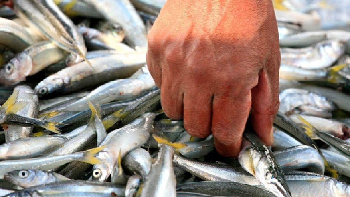 Seis especies de la fauna ictícola del embalse de Río Tercero contienen altos niveles de arsénico y mercurio.