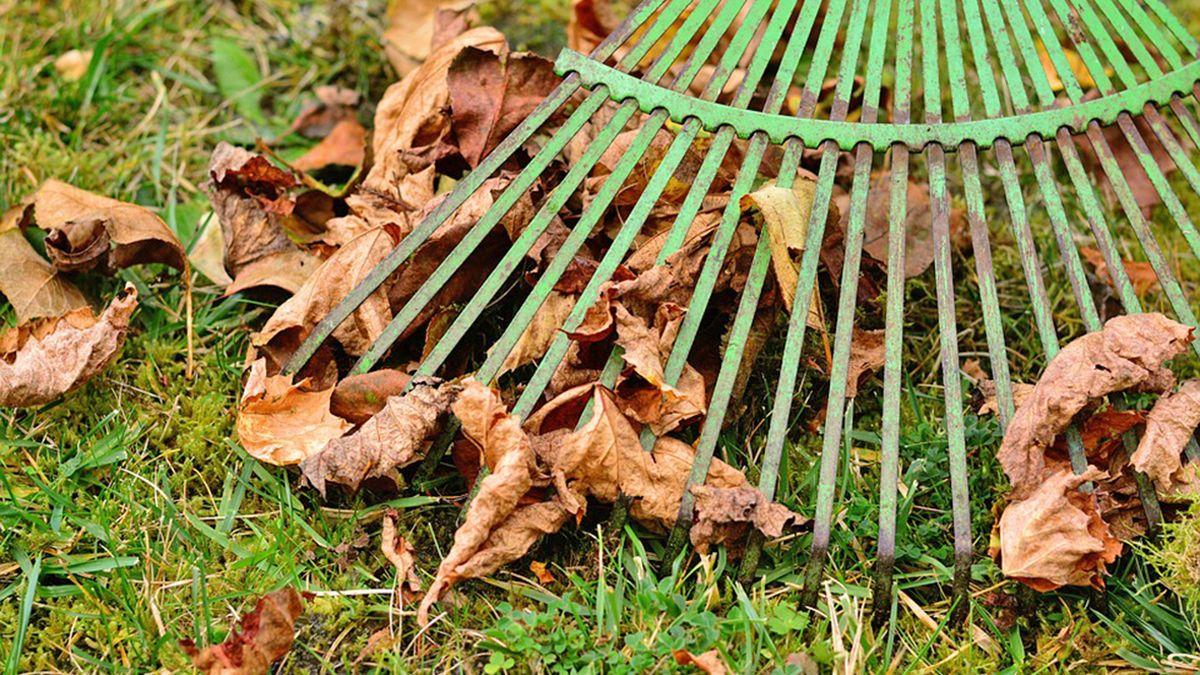 Tips para mantener nuestro jardín en pleno otoño