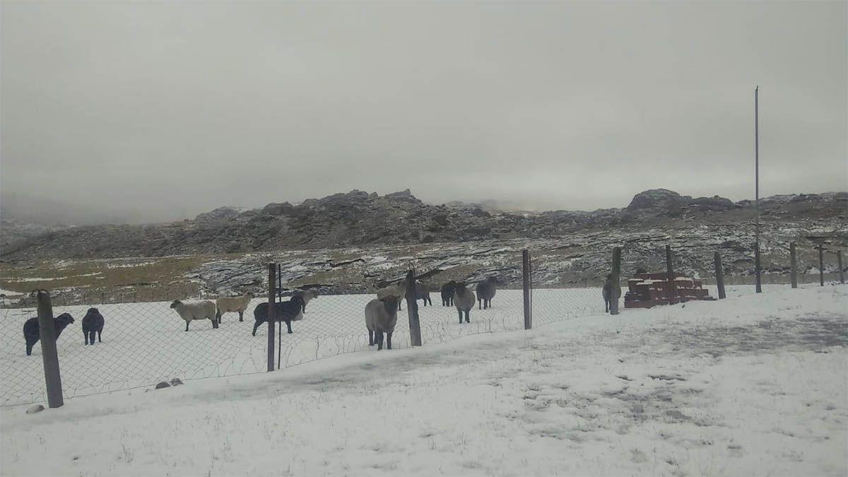 Nieva en el cerro ChampaquíCrédito: Nelio Escalante