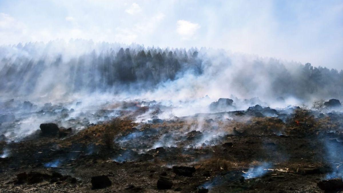 Las llamas avanzaron en un sector de pinares.