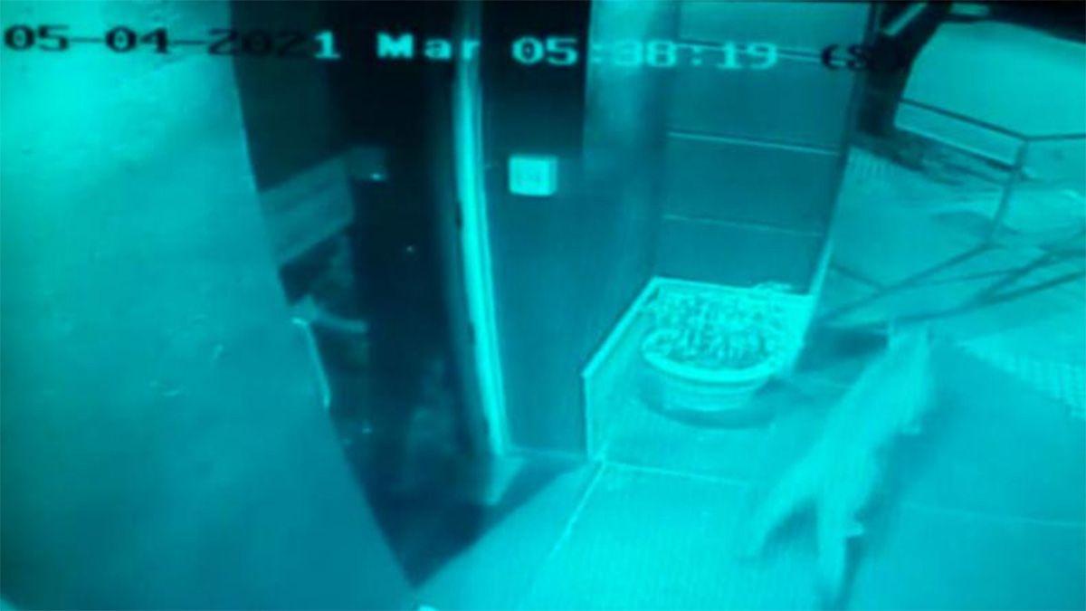 El puma quedó registrado en las cámaras de seguridad de la Municipalidad de Río Primero