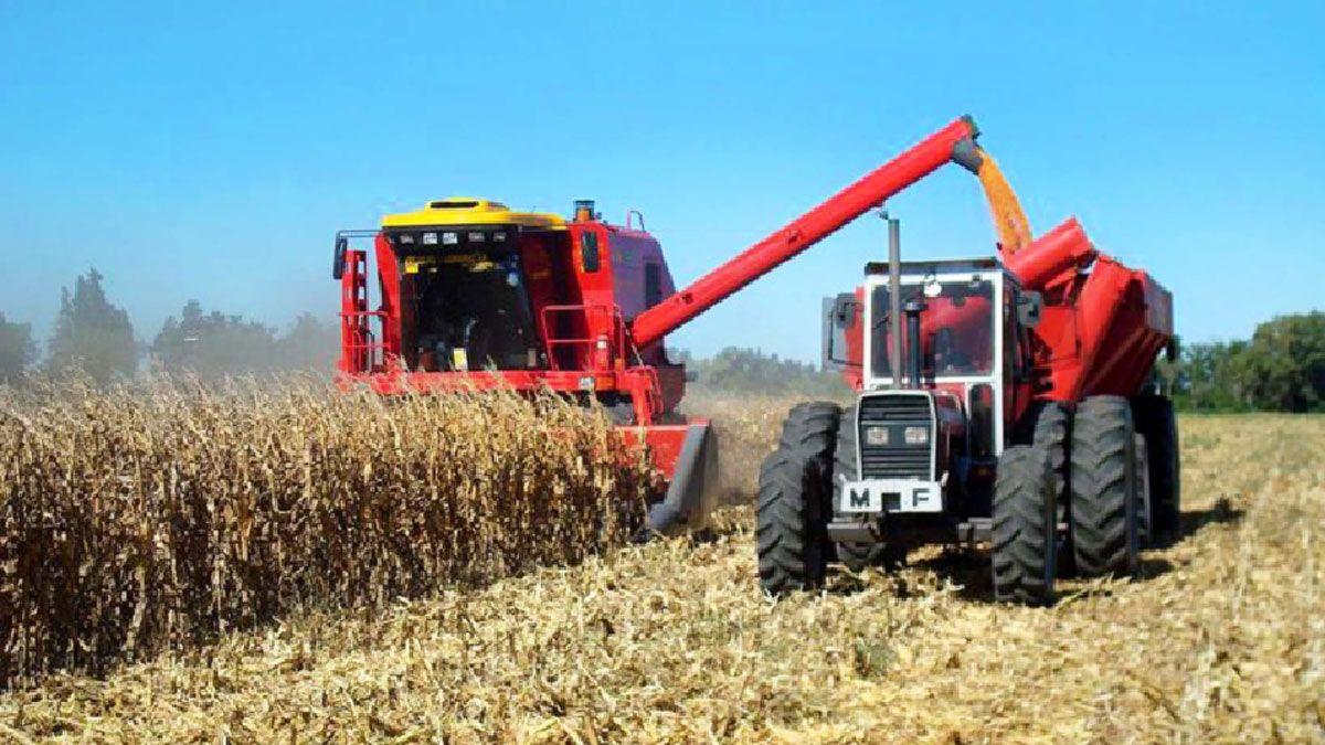 El valor bruto de la producción de maíz crecería 34% y llegaría a los 4.053 millones de dólares en Córdoba.