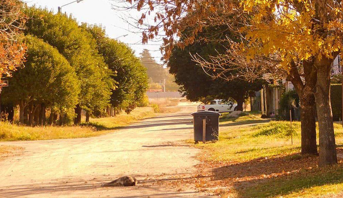 Las Higueras: concejales piden informes  sobre supuestas duplicaciones de obras