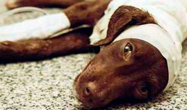 Confirman la condena al peluquero por la muerte del perro Chocolate