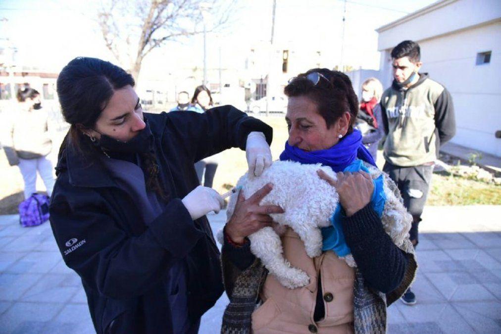 Más de 1900 animales fueron inmunizados contra la rabia