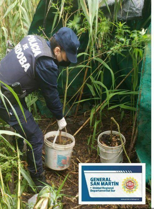 Marihuana en Arroyo Cabral: desde la Fiscalía indicaron que  el hallazgo de la droga fue casual