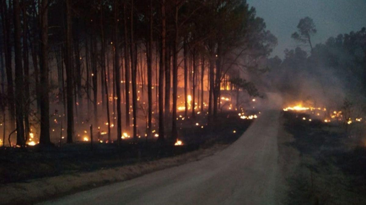 Las llamas llegaron a los pinares en Alpa Corral.