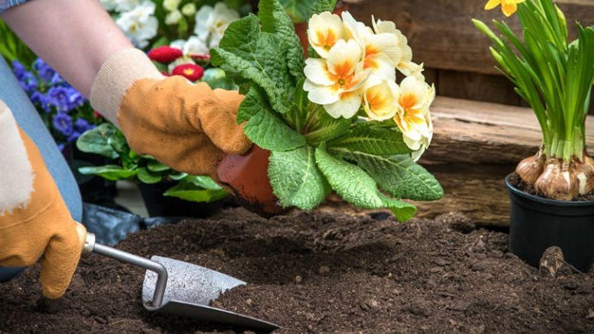 ¿Cómo elegir la mejor plantapara nuestro jardín?