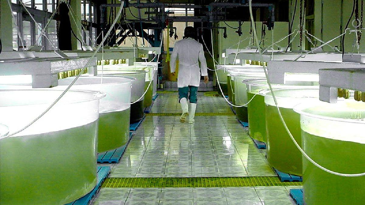 La industria del biodiesel permaneció en marcha sólo 4 meses este año.
