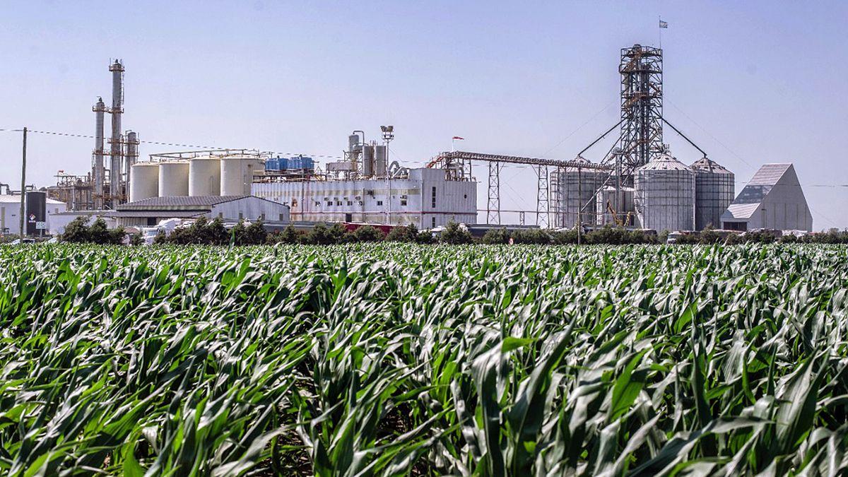Los campos con maíz y las industrias de etanol en la provincia