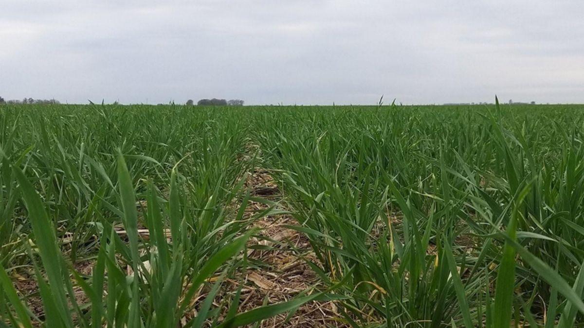 Enero experimentará precipitaciones abundantes pero irregulares en la mayor parte del área agrícola