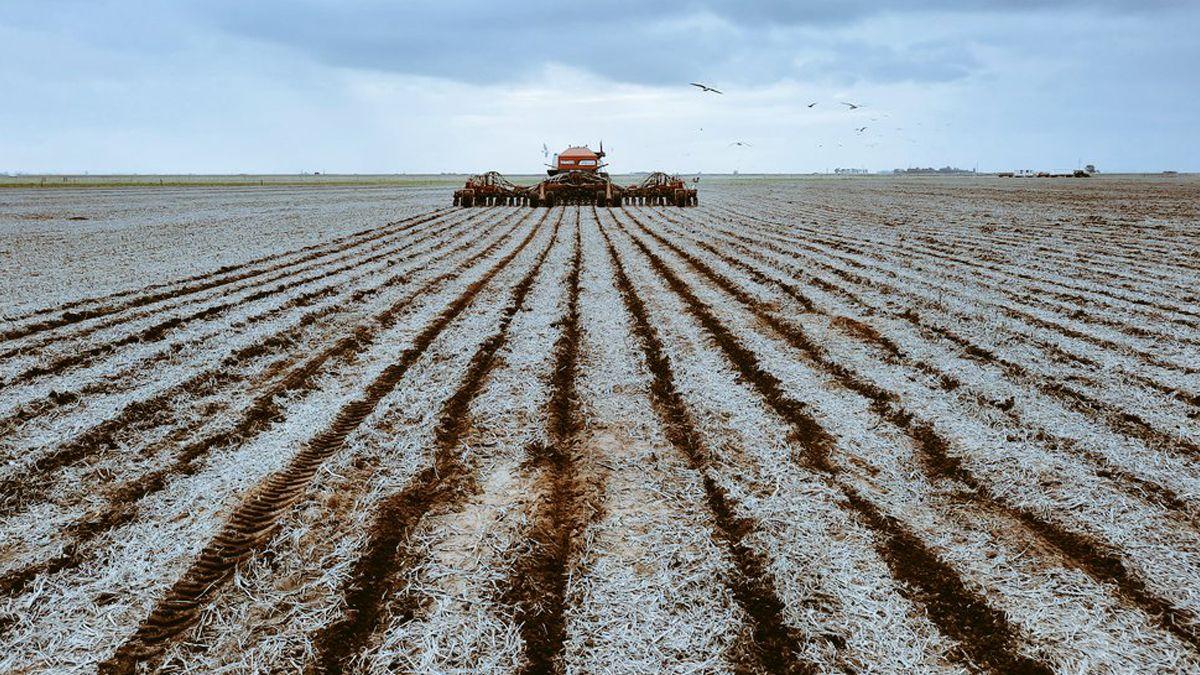 La siembre de maíz comenzó en algunas zonas de la Argentina aunque la opción de los tardíos parece volver a imponerse.