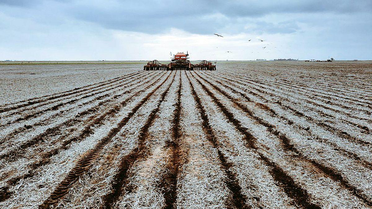 Los márgenes económicos en muchas zonas son mejores para el maíz que para la soja.