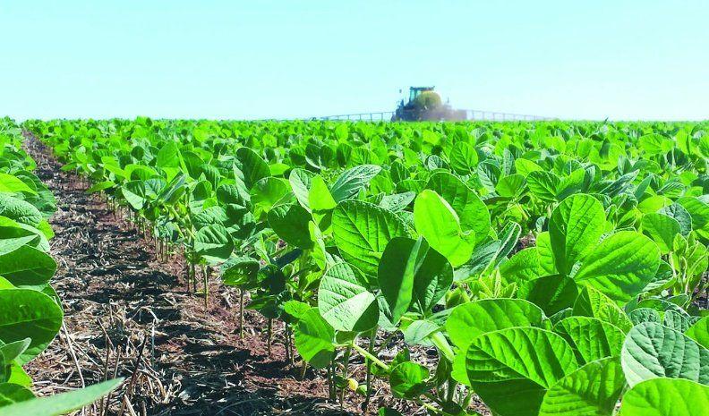 Mejora la soja y el maíz sigue en condiciones excelentes