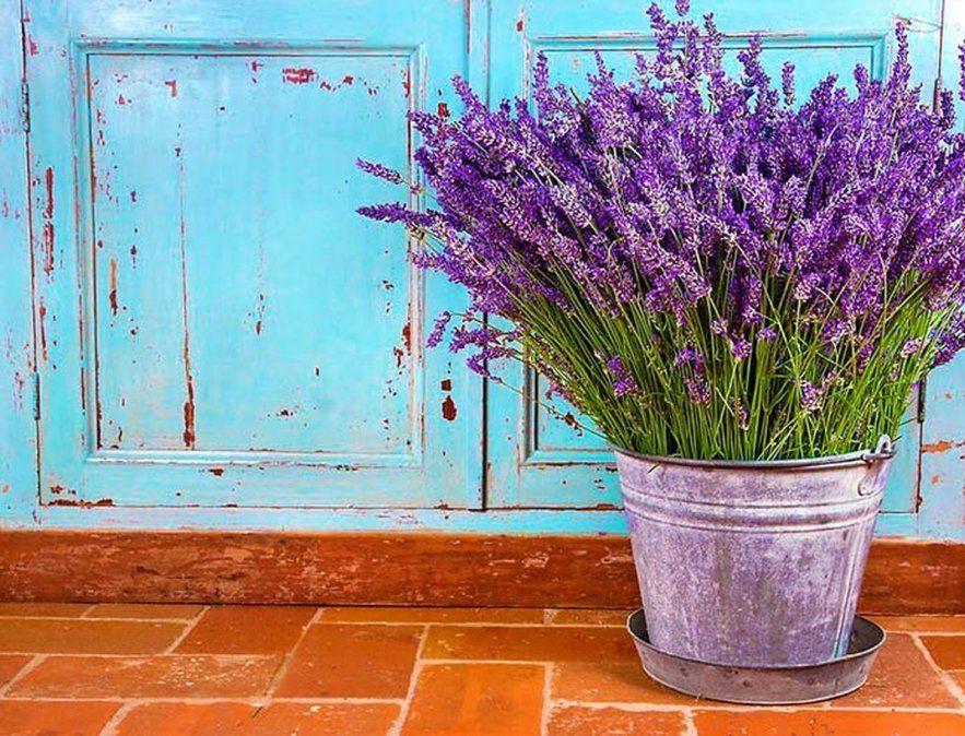 Plantas que son repelentes naturales