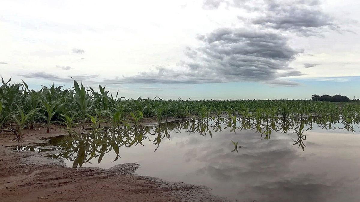 BCBA: se espera que las lluvias registradas reactiven la siembra en las zonas clave que actualmente registran importantes demoras.