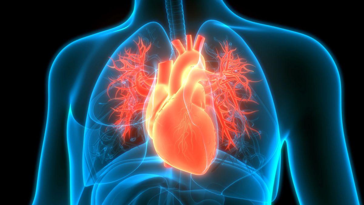 La utilidad de las imágenes cardiovasculares se extiende por numerosas patologías.