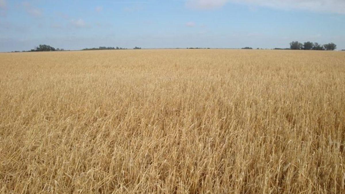 Un 60% de los empresarios agrícolas experimentó este año daños productivos por sequía en cultivos de invierno.