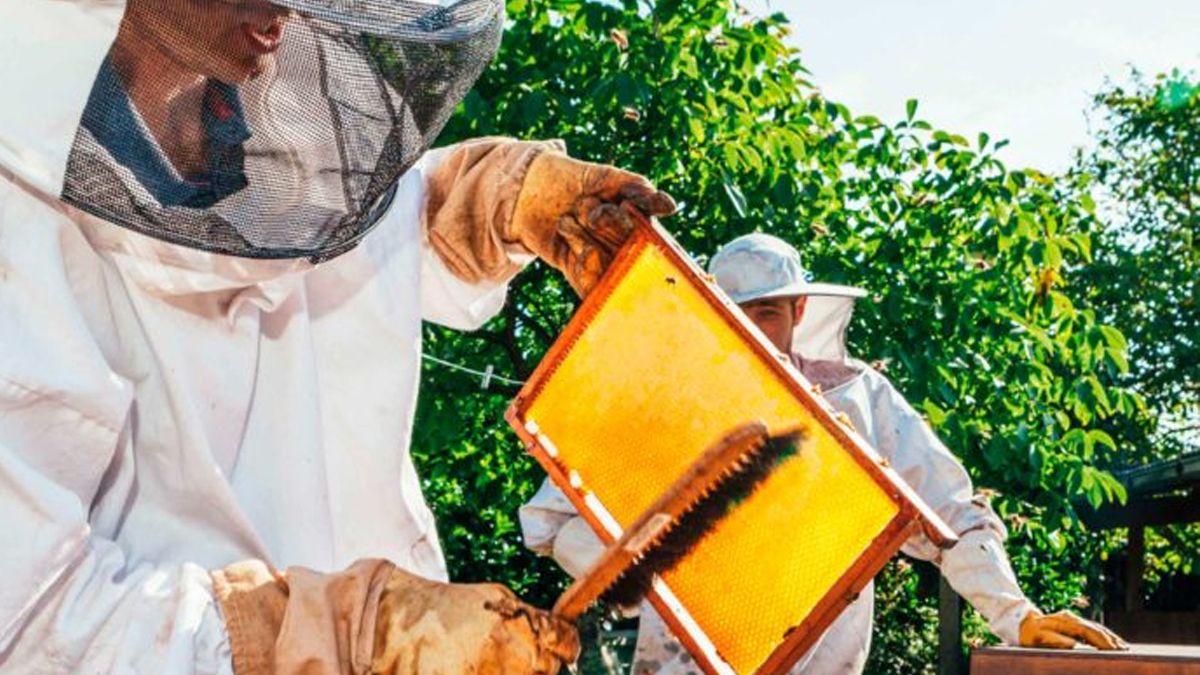 El Gobierno recordó que mediante el Decreto N° 230/20 se fijaron las alícuotas de Derechos de Exportación para diferentes mercaderías
