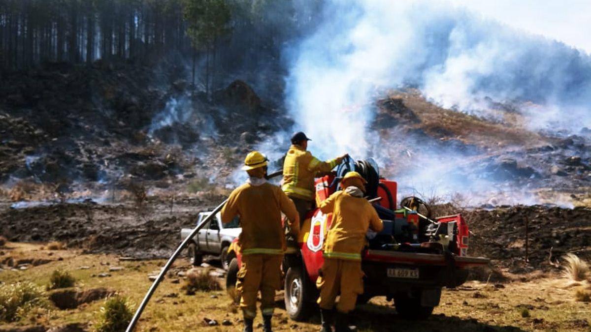 El fuego afectó una plantación de pinares en la zona de Huerta Vieja.