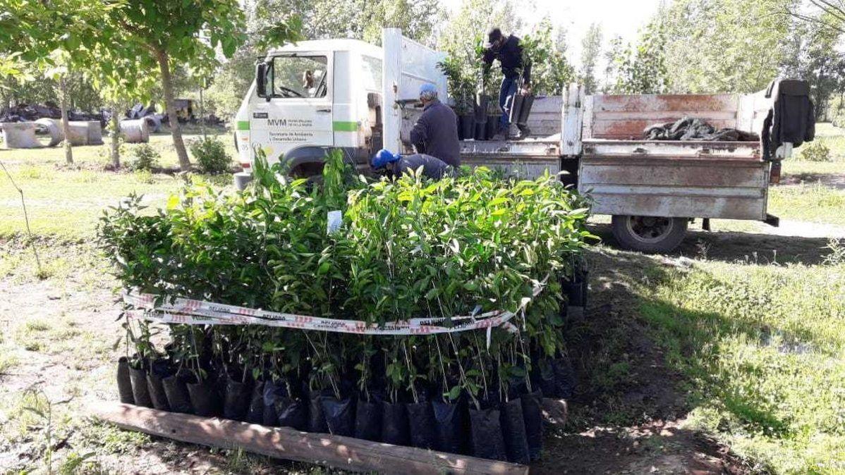 Los interesados en recibir un árbol frutal  deben inscribirse vía web.