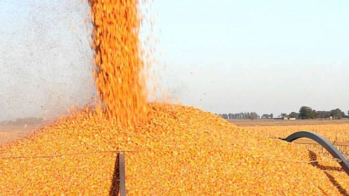 ¿Había fundamentos sólidos para cerrar las exportaciones de maíz?