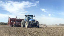 La siembra de trigo tuvo algún recorte por la falta de agua en el suelo y las pocas lluvias de otoño e invierno. La gruesa comenzó, pero espera agua para acelerar.