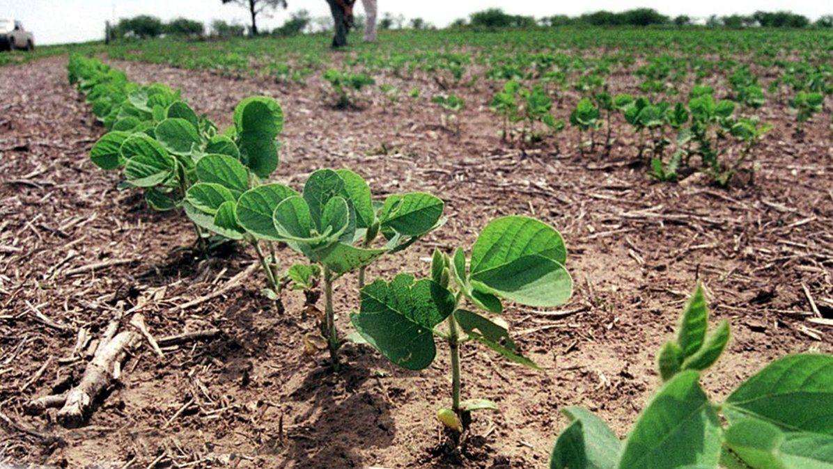 Estados Unidos bajó el cálculo de su cosecha y volaron la soja y el maíz