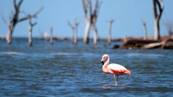 Córdoba elevó el último informe para que Ansenuza sea Parque Nacional